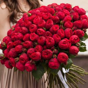 Красные пионовидные розы R001